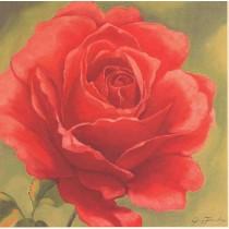 """Bild """"Rose in rot"""" in Echtholzrahmen terrafarben"""